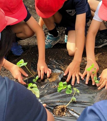 土に触れることの大切さ 園芸の時間