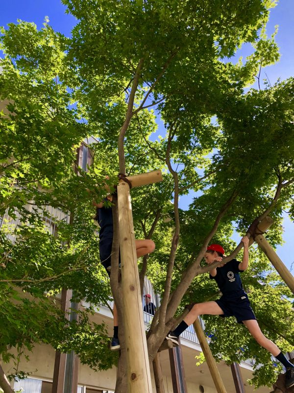 朝から木登りをしている学校